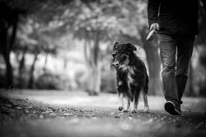 dog with owner walking in the park