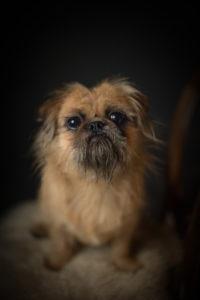 cute dog photography